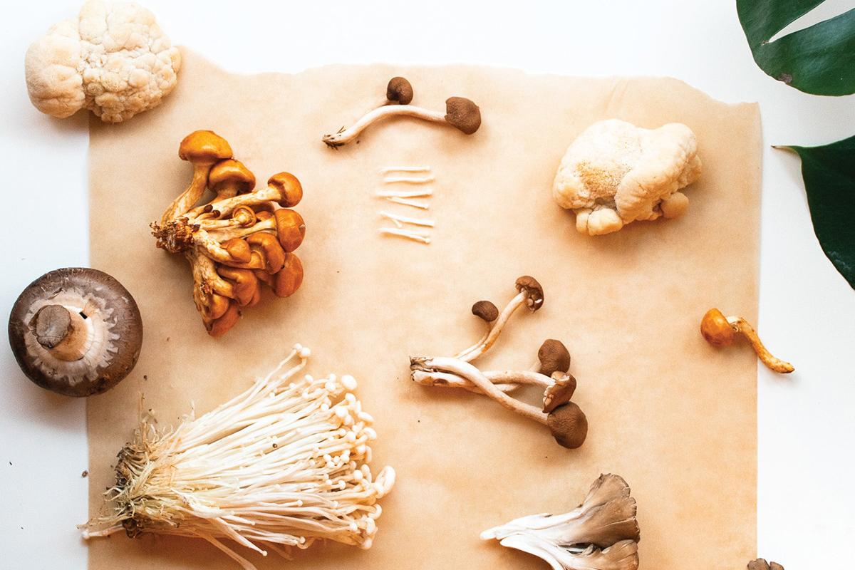 грибы бады